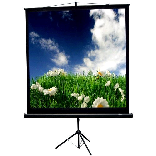 Where to find PROJECTOR SCREEN, 70 x70 in Gulfport